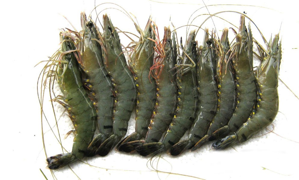Amardesh e-shop | Prawn (kg) Big