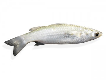 ফাইশা মাছ (15- 20 pcs) কেজি