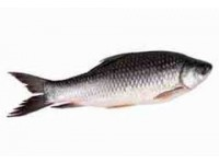রুই মাছ (কেজি)
